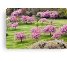 Blossom On The Green Canvas Print