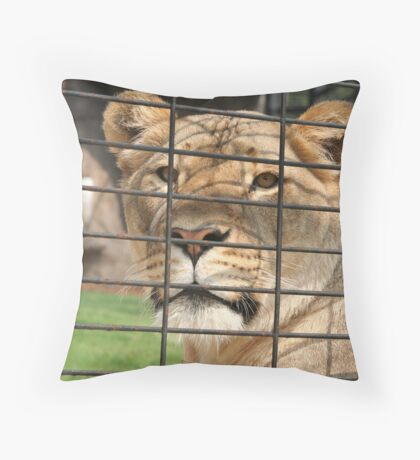 Lioness Looking out of Her Cage Throw Pillow
