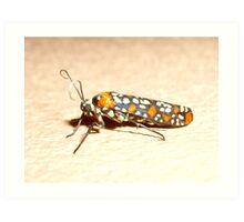 Tobagan Moth Art Print