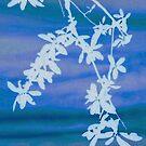 White Branch by MidnightAkita