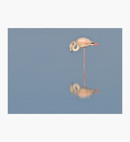 Flamingo solitaire Photographic Print