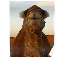 Bedouin Camel Poster
