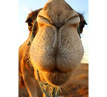 Candid camel Photographic Print