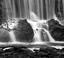 Serenity by David McCrillis