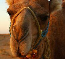 Desert Dessert - Sahara desert, Tunisia by Anne Kingston