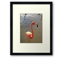The eyes have one language everywhere Framed Print