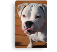 If dogs could talk, it would take a lot of the fun out of owning one Canvas Print