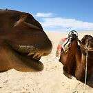 Close up Camels, Sahara desert, Tunisia by Anne Kingston