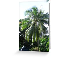 Green coconuts on tree Greeting Card