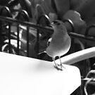 Sparrow at my table by Camelot