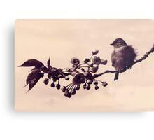 Flowered Finch Metal Print