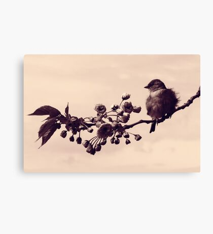 Flowered Finch Canvas Print