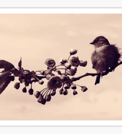 Flowered Finch Sticker