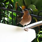 Bird at my table 2 by Camelot