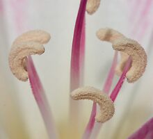 Naked Lady Lily by Belle Farley