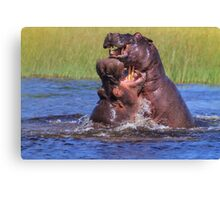Hippo by the Throat Canvas Print