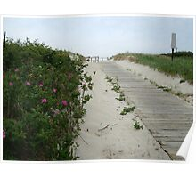 Pink Dune Flowers in Spring Lake, New Jersey Poster