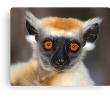 Look into the eyes of the lemur Canvas Print