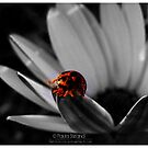 Small World by Gozza