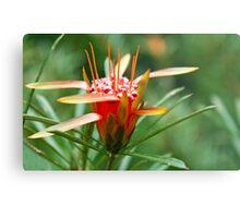 Mountain Devil Flower Metal Print