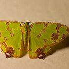 Green Moth by Belle Farley