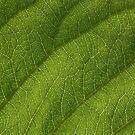 Leaf 0550 by João Castro