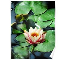 Light of the Lily Pond Poster