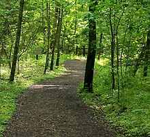 Path to Spring - Cincinnati Nature Center Ohio by Tony Wilder