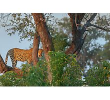 A Golden Spot between the Branches Photographic Print