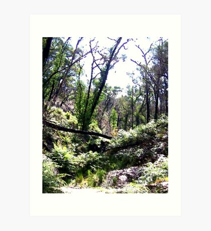 Brush -  Grampians, Australia Art Print