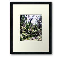 Brush -  Grampians, Australia Framed Print
