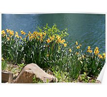 Daffodli's on Waters Edge Poster