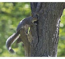 Squirrel mother and 2 babies Photographic Print