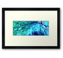 Abstracted Branches, Leaves and Sky – May 11, 2010 Framed Print