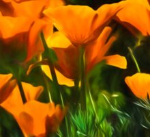 Brilliant Orange California Poppies - Impressions of Desert Spring Sticker