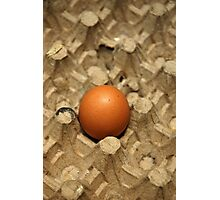 egg Photographic Print