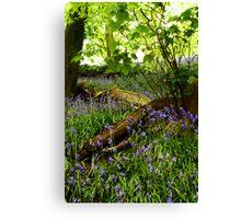 Bluebell Wood, Brock Bottoms, Lancashire Canvas Print