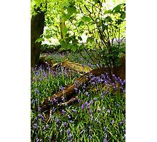 Bluebell Wood, Brock Bottoms, Lancashire Photographic Print