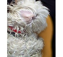 Muffy's Wet Ear Photographic Print