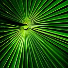 Palm Leaf by Ravensara