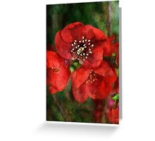 Japonica Blossoms Greeting Card