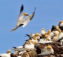 gannet controlled landing by Grandalf