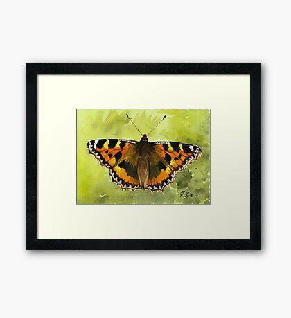 Tortoiseshell Butterfly Framed Print