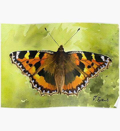 Tortoiseshell Butterfly Poster