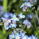 Forget Me Not by Michele Markley