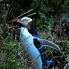 Yellow Eyed Penguin by Julie Teague