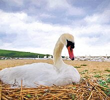 Nesting Mute Swan At Abbotsbury - Impressions by Susie Peek