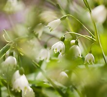 The Giants of Snow Drops by Marilyn Cornwell