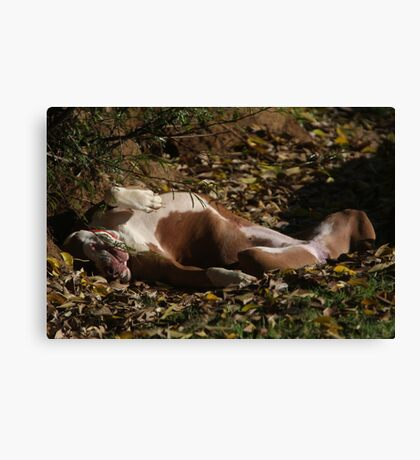 Absolute relaxation Canvas Print
