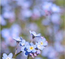 Forget Me Not by Bamalam Art and Photography